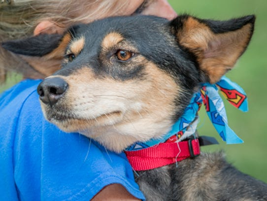 Piper is waiting for a home at Nashville Humane Association.