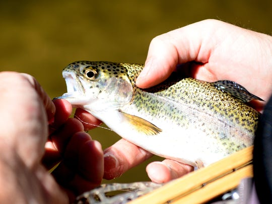 Giles Simpson, of Wilmington, releases a rainbow trout he caught back into the water during an introduction to fly fishing class on the East Fork of the French Broad River near Rosman on Tuesday, Oct. 11, 2016.