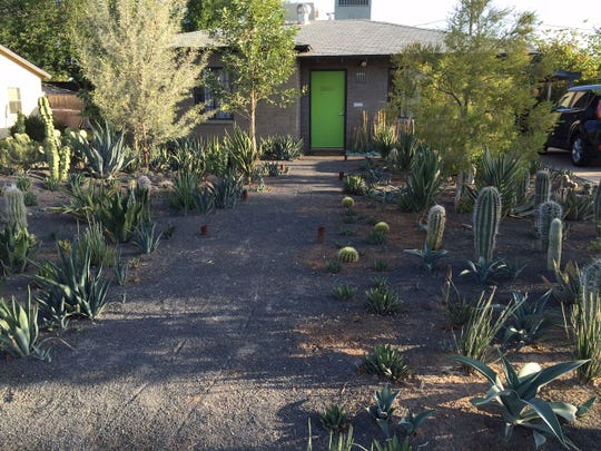The plants Phoenix resident Tim Bishop is growing on