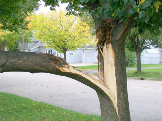 08 24 2015 Tree structural disorder Storm damage Green Bay