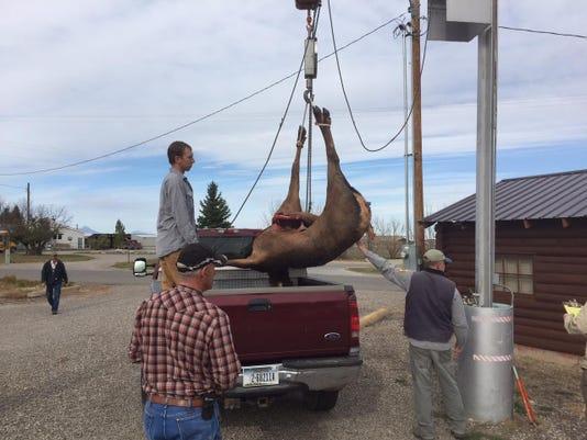 -cow elk check station.jpg_20151128.jpg