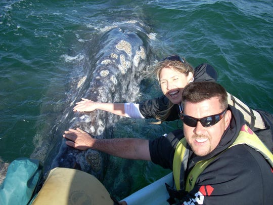Bond with a baby whale up close, courtesy Baja Airventures (2)