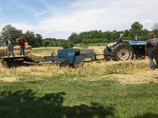 rye harvest