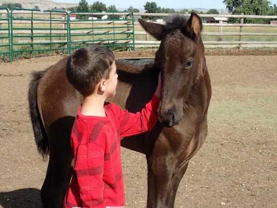 -jeppesen's foals are inquisitive from an early age. grisak.jpg_20170720.jpg