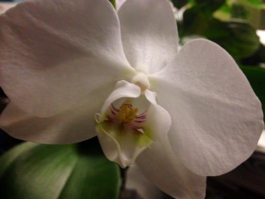 APC 102014 Yard MD BLOG-orchid auction.JPG