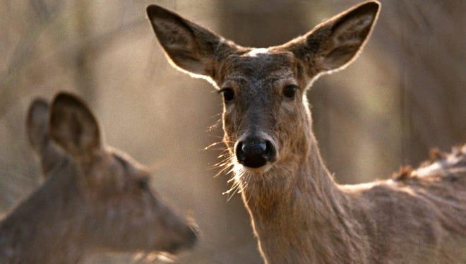 Michigan deer.