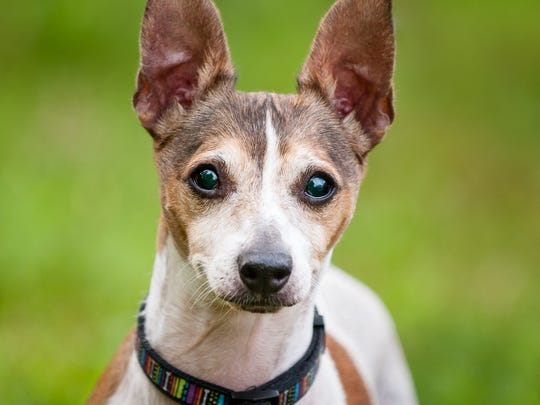 Sparky is up for adoption.