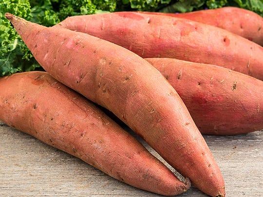 Hancock County Extension Educator Roy Ballard plants 'Beauregard' sweet potatoes in his garden, along with 'Waltham' squash and an heirloom green bean.