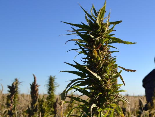 Hemp Grower