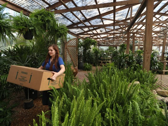 Kaelin Kane organizes the green house at Tallahassee