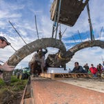 U-M Museum of Paleontology collections manager Adam Rountrey, Earth and Environmental Sciences undergraduate David Vander Weele and paleontology Ph. D. candidate Michael Cherney help guide the Mammoth skull and tusks as they are lowered onto a flatbed trailer.
