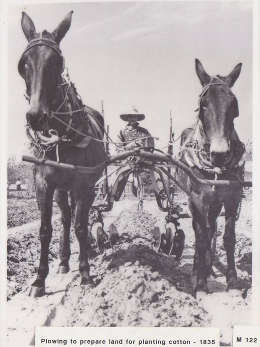 Plowing to plant cotton.jpg