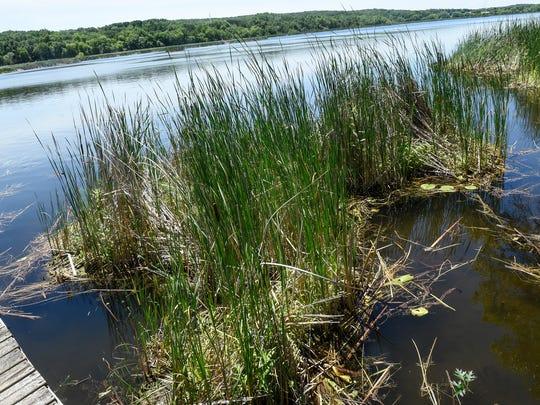small floating bogs are seen near shore Thursday, July 5, at Linneman Lake near Avon.