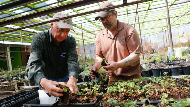 Customer Loren Diede, left, gets help picking plants from assistant manager Scott Rubenstein Friday at San Juan Nurseries in Farmington. A bill passed by the state Legislature is designed to eliminate confusion between cities and counties, and the New Mexico Taxation and Revenue Department over tax revenue distributions.