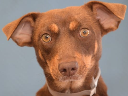 ADOPTABLE-ANIMALS--Kyra
