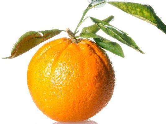 tclo-citrus2.JPG