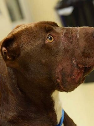 Dog Caitlyn was found with her muzzle taped shut.