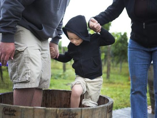 A Rochester-area 3-year-old  stomps on grapes.