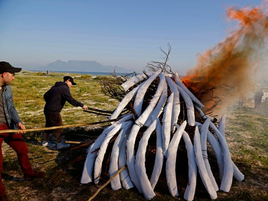 Conservationist burn handmade elephant tusks as they mark World Elephant day in Cape Town, South Africa, on Aug. 12, 2014. Thousands of elephants are killed each year for the illegal trade of ivory across Africa.