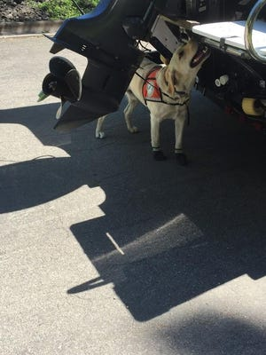 Aquatic invasive species detection dog Tobias sniffs a boat to check for invasive species.