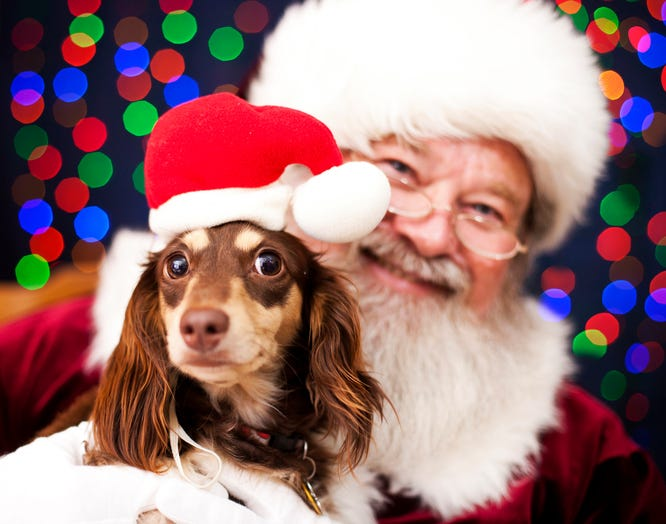 Your Pet Can Get A Free Photo With Santa At