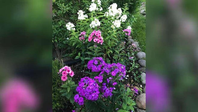 The colors of phlox in a garden planted by Carleton Varney's sister inspired the decorator to create a memorable room scheme for a master bedroom.