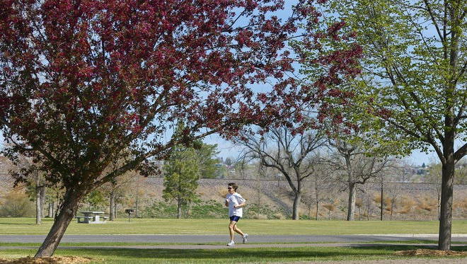 Trees bloom in Gibson Park in Great Falls. The city is responsible for maintaining more than 30,000 trees in the boulevard district and parks.