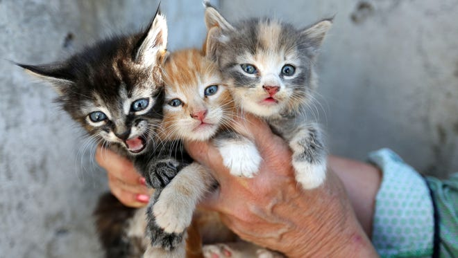 Low On Cat Food Nonprofit Issues Plea