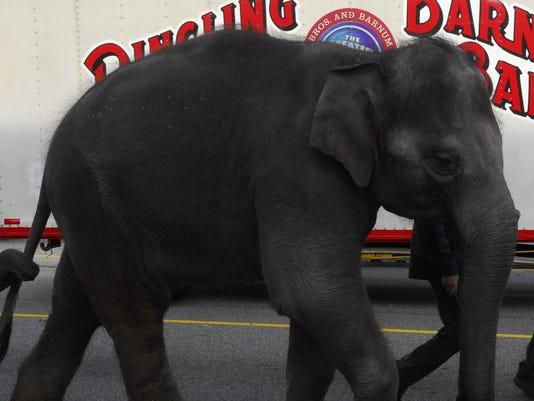 Circus animal parade