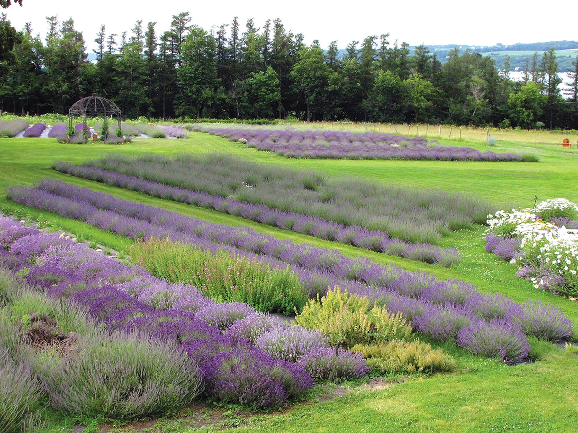 Lockwood Lavender Farm, home of the Finger Lakes Lavender