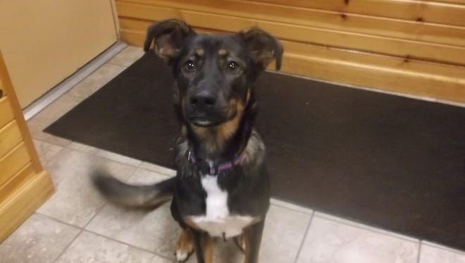 Lucy needs a forever home