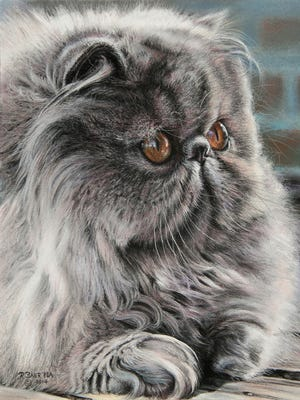 """Roby Baer's pastel """"Persian Cat."""""""
