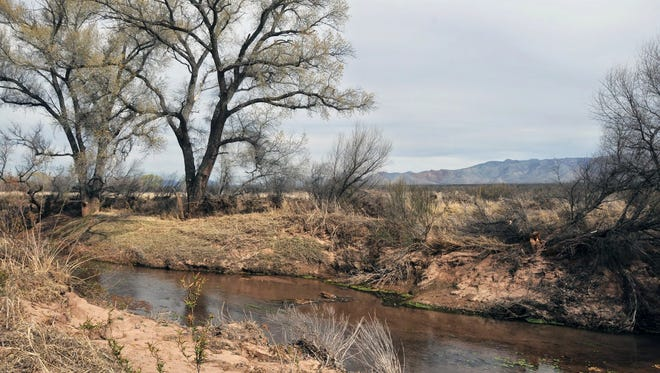 The San Pedro River Trail runs adjacent to the water within the wildlife habitat of the San Pedro Riparian National Conservation Area.