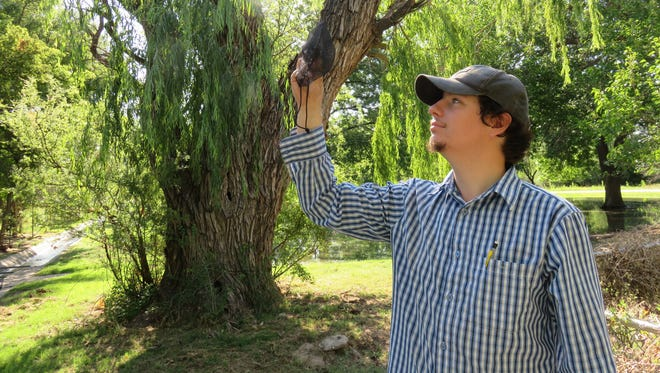 New Mexico State University student Kevin Virden study mosquitoes trapped near Carlsbad Caverns National Park. Eddy County is one of ten counties to have the mosquitoes that could potentially carry the Zika Virus.