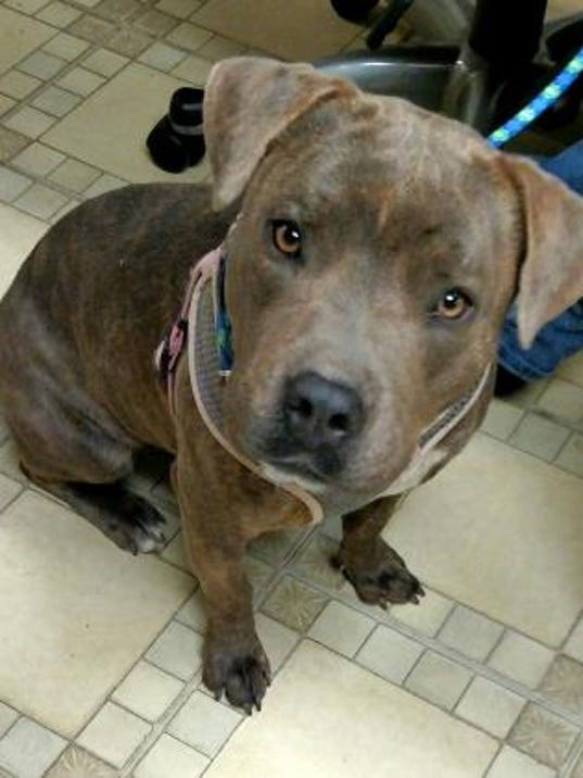 Pet of the day: Sweetie