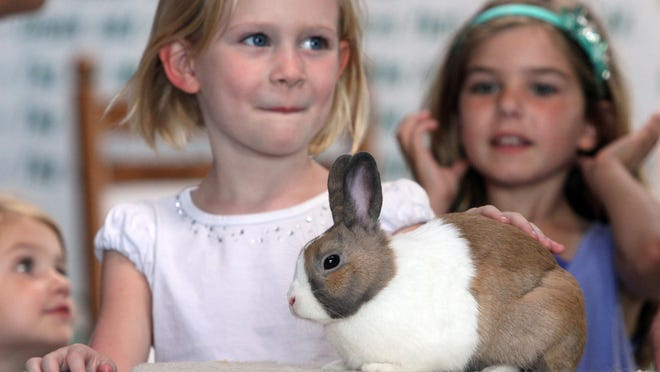 Children line up to pet a rabbit inside the 4-H small animals tent at the 75th Annual New Jersey State Fair/Sussex County Fair held at the Sussex County Fairgrounds in Augusta on Saturday August 1, 2015.