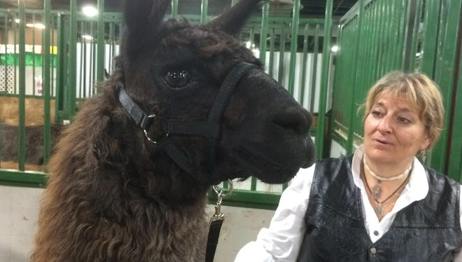 Dearborn's Dee Greaves stands with a llama named Argento De Cocco Sunday at Lamafest 2014 at Michigan State University's Pavilion.