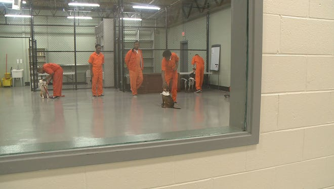 Fulton County jail inmates work with Canine Cellmates dogs that will be adopted out.
