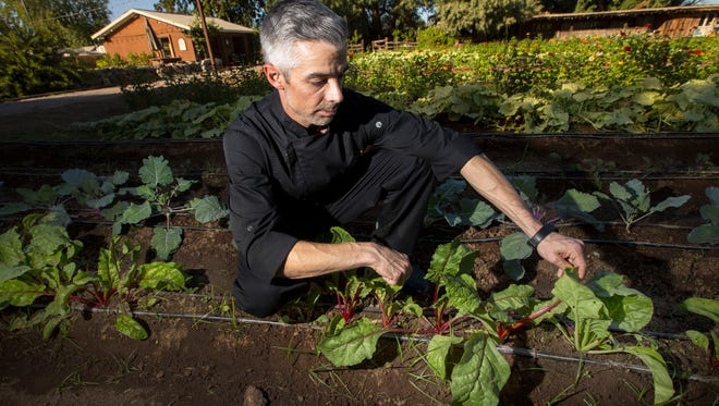Executive Chef Dustin Christofolo looks over the swiss chard growing on Oct. 25, 2017 at Quiessence at The Farm at South Mountain in Phoenix, Ariz. Quiessence has planted a 3/4 acre farm to provide the produce for the restaurant.