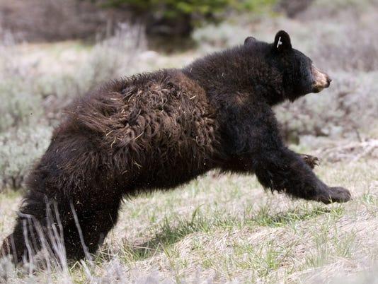 5-30-Bear_016