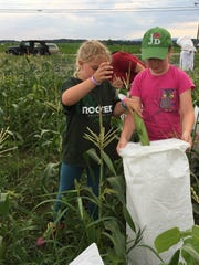 Mollie Yardley, left, puts an ear of corn in a gleaning bag held by Emily Bonebrake at the Country Creed Produce Farm Monday, July 10, 2017.