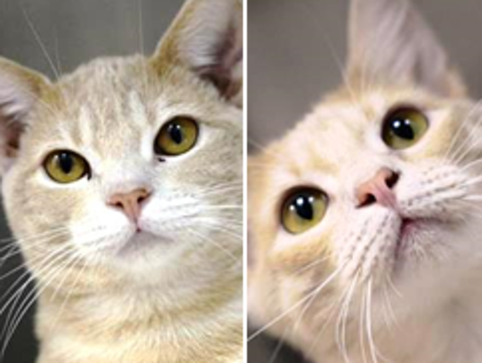 PET OF THE WEEK, BILL AND TED