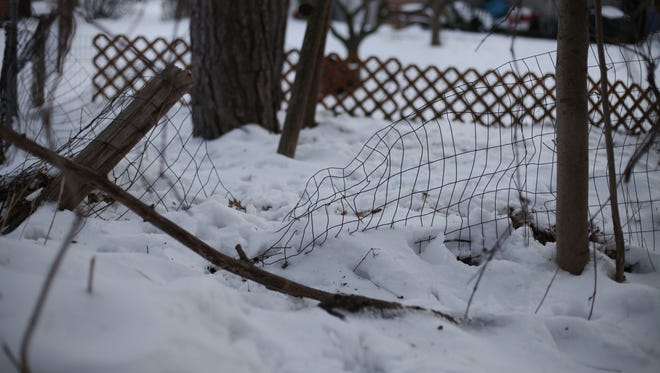 A small fence between the Shriner's yard and their neighbor's has been trampled by deer.