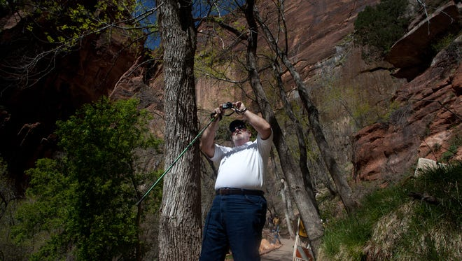 A Zion National Park visitor stops to make a photograph on the trail to Weeping Rock at the park Saturday, April 20, 2013. A reported rockfall near the trail on Saturday injured three hikers and forced the closure of several trails.