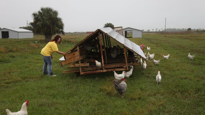 Circle C Farms in Felda raises poultry, hogs, lamb, and cows. The farm sells its eggs, meat and honey from its store in Bonita Springs.