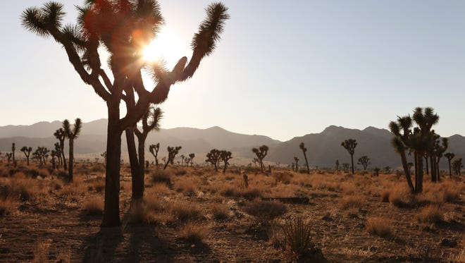 The sun sets at Joshua Tree National Park in July 2012. The park hit the two-million visitors mark this week, a record.