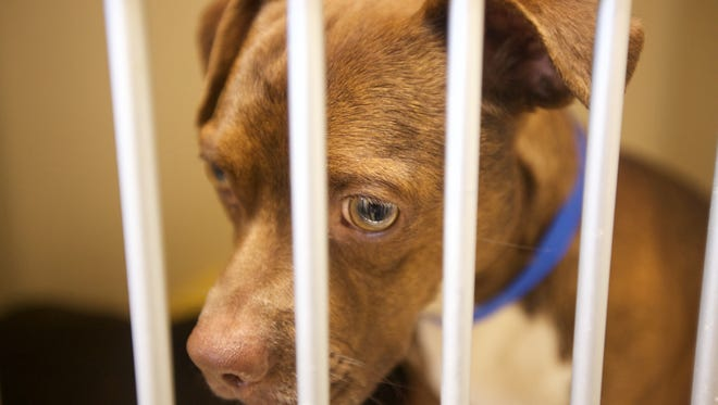 17 dogs were rescued Sunday from a home in Keyport.
