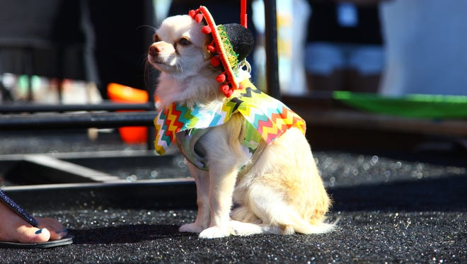 There will be a Chihuahua Beauty Pageant (as in doggies), and hot chili-pepper-eating and taco-eating contests.