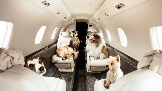 "Victor, a private jet charter service, is now offering a ""Furs Class"" service for pets."