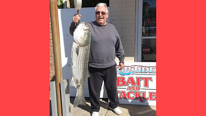 Fred Bowen with a 28 pound, 42 inch striper he caught on the North end of Brigantine using a clam.